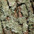 Herbaciany sekret zdrowia